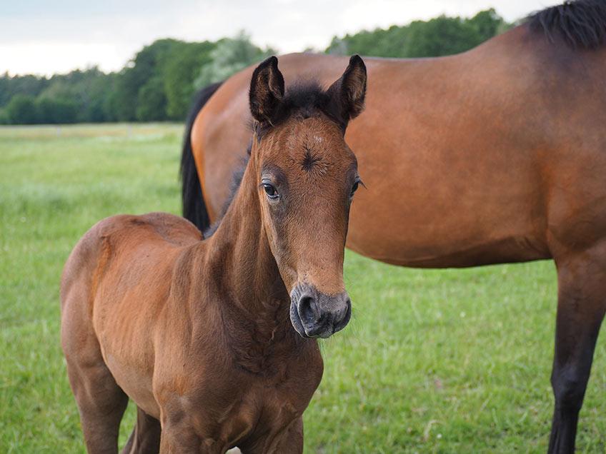 AKH Pferdesport Angebot Aufzucht Betreuung